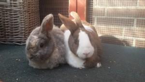 Kaninchen 10.07.16
