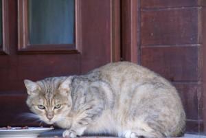 Katze 22.09.16