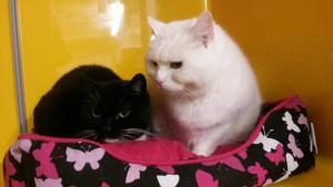 Katzen 07.12.16